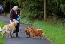 Top Recreation Parks for Seniors In Camberwell | Aged Care Weekly