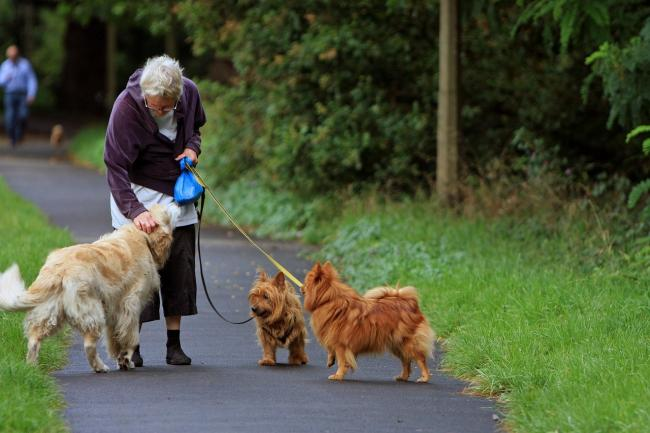 Top Recreation Parks for Seniors In Camberwell