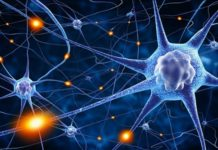 Things you didn't know about your brain | Aged Care Weekly