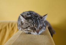 Take Your Pet With You to Aged Care or Retirement | Aged Care Weekly